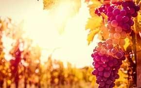 49% Jižní Morava: 3 denní vinařský pobyt pro DVA s…