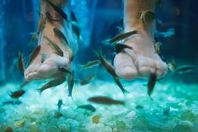 Sleva 82% - Božská 120min. relaxace pro dámy: výběr z masáží + relaxace s rybičkami Garra Rufa v…