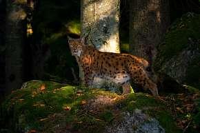 Sleva 36% - Jednodenní skvělý kurz fotografování v NP Bavorský les