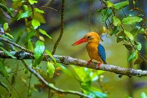 Sleva 24% - Fotografický kurz v 10 zoologických zahradách pro začátečníky i pokročilé