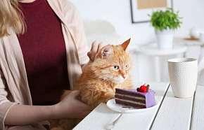 Sleva 20% - Konzumace dortíků, zmrzliny, teplých i studených nápojů s poukazem do kočičí kavárny…