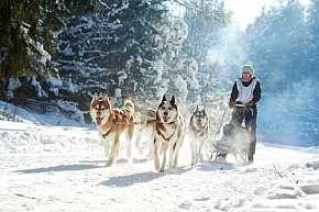 Sleva 50% - Zážitková jízda na psím spřežení v malebné šumavské přírodě